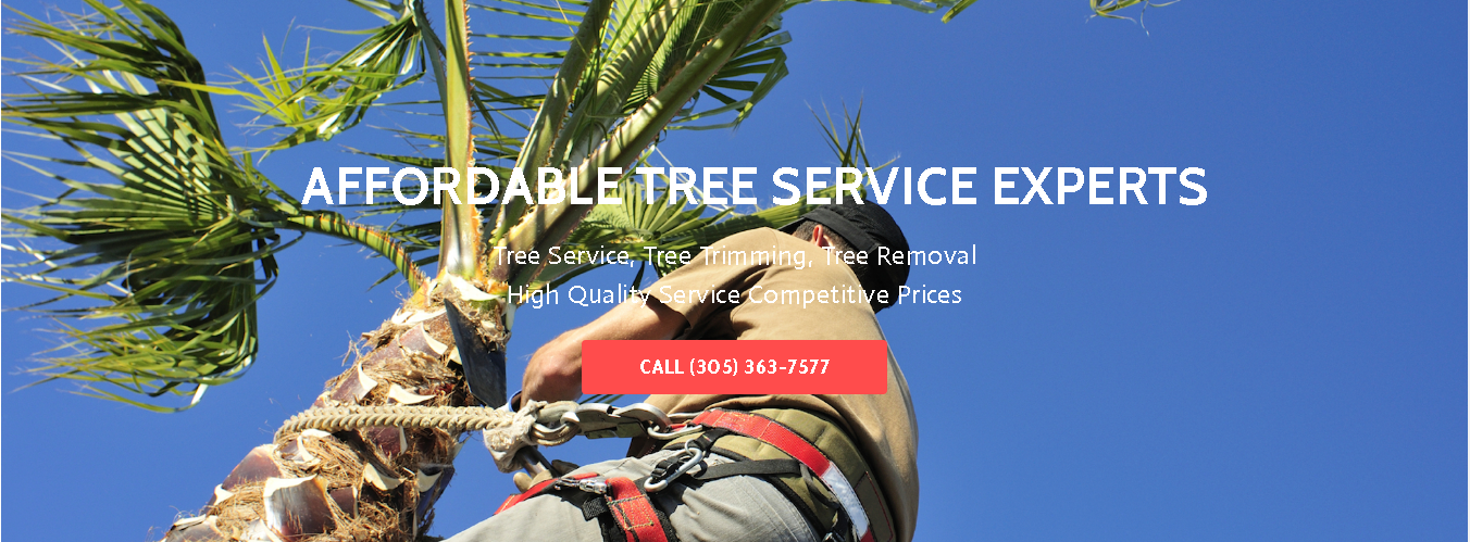 When Should you Trim Your Miami Dade Trees?